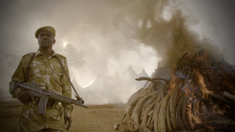 """The Ivory Game"" © Richard Ladkani/Netflix"